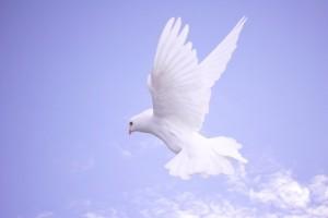 inner peace bird
